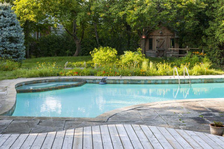 plantes piscine