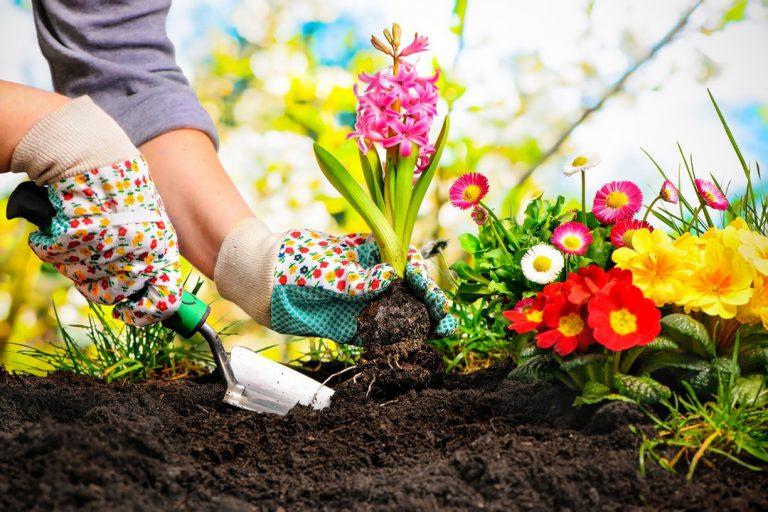Top 10 des fleurs à planter à côté d'une piscine